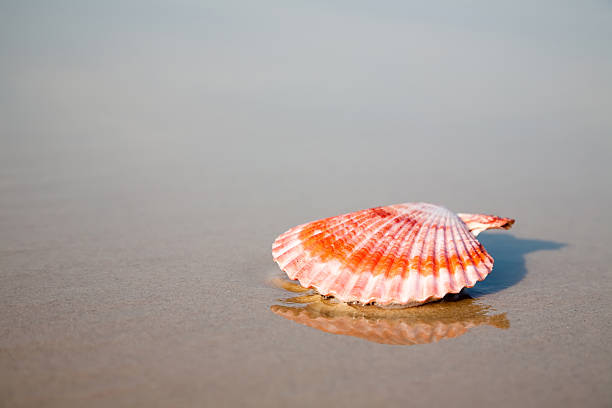 Red shell on the water foto