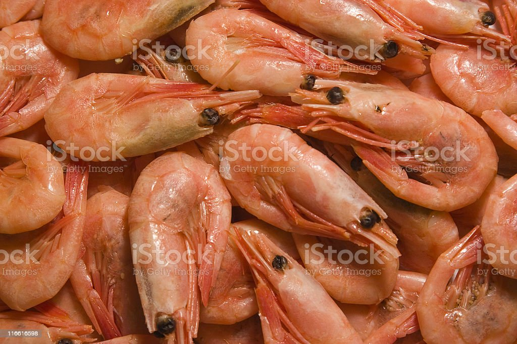 Red shrimps stock photo