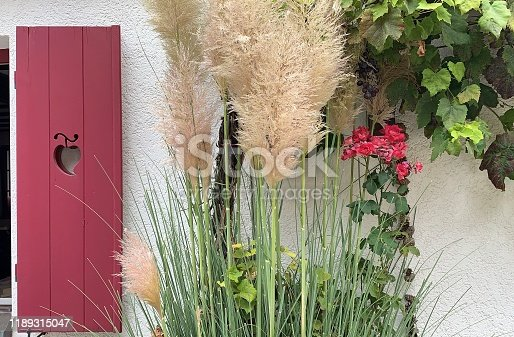 Red shutter and plants at the white house facade