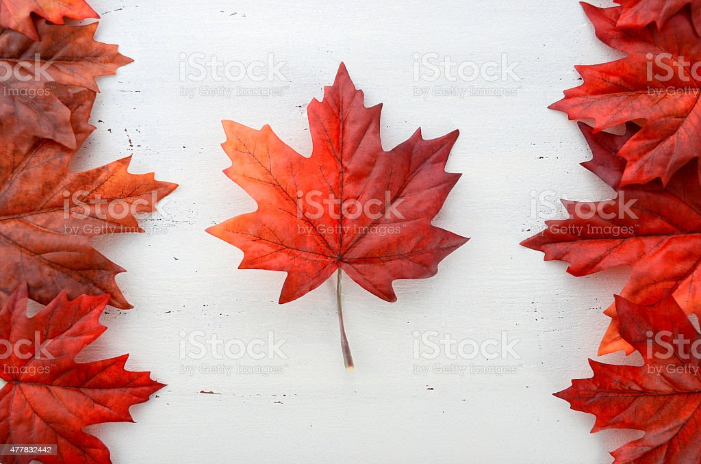 Red silk maple leaves in shape of Canadian Flag. Happy Canada Day red silk leaves in shape of Canadian Flag on white shabby chic wood table. 2015 Stock Photo