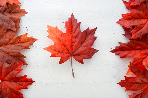 Red Silk Maple Leaves In Shape Of Canadian Flag Stock Photo - Download Image Now