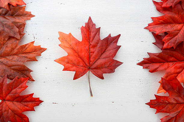 red silk maple leaves in shape of canadian flag. - canada day stock pictures, royalty-free photos & images