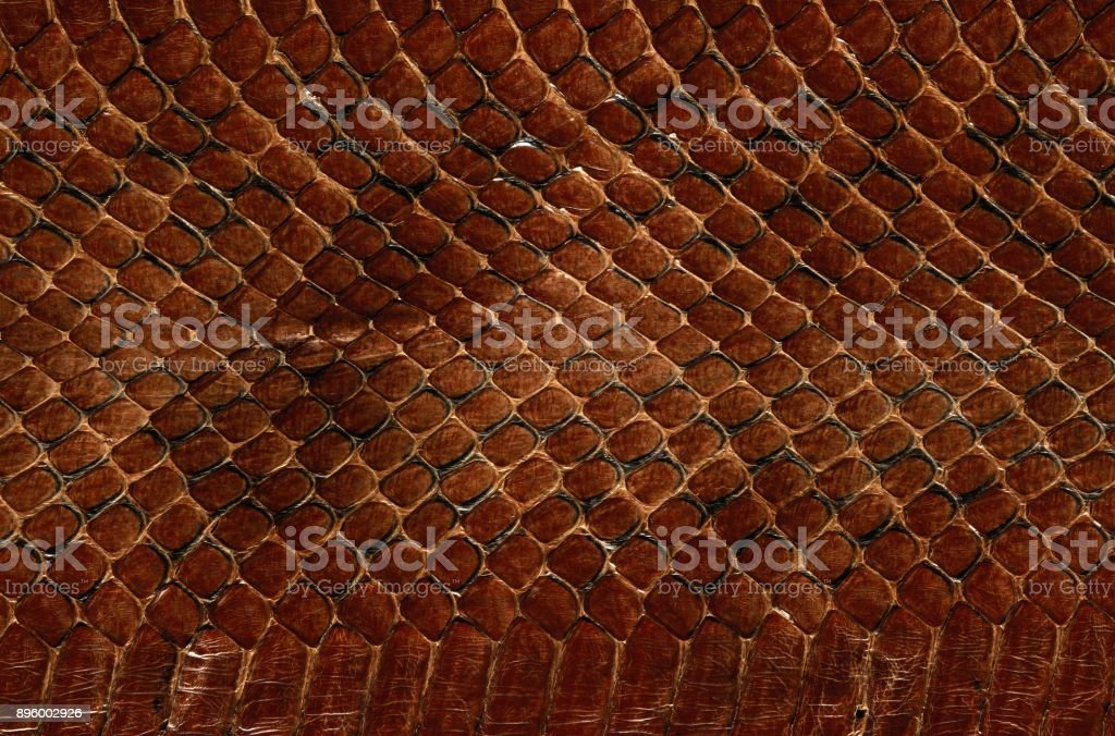 red snake skin texture stock photo