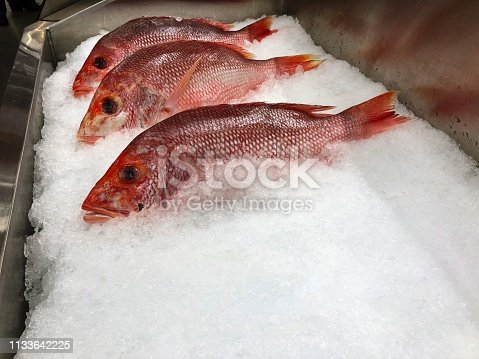 Red snapper fish on ice