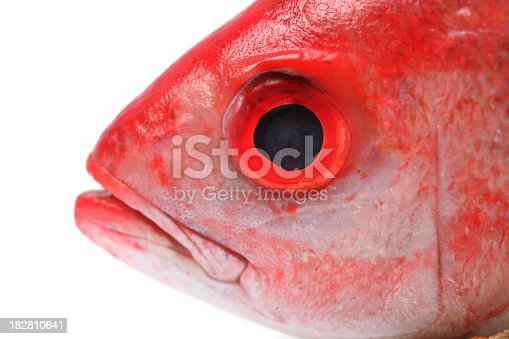 Red snapper head on a white background.