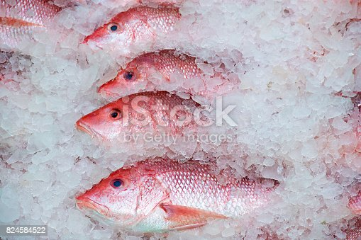 row of red snapper in ice