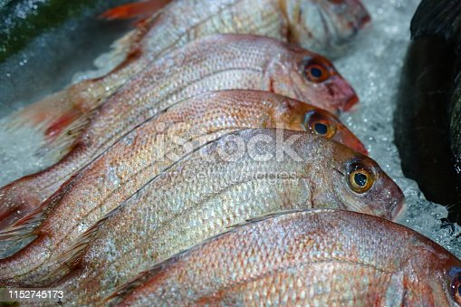 Red snapper in market