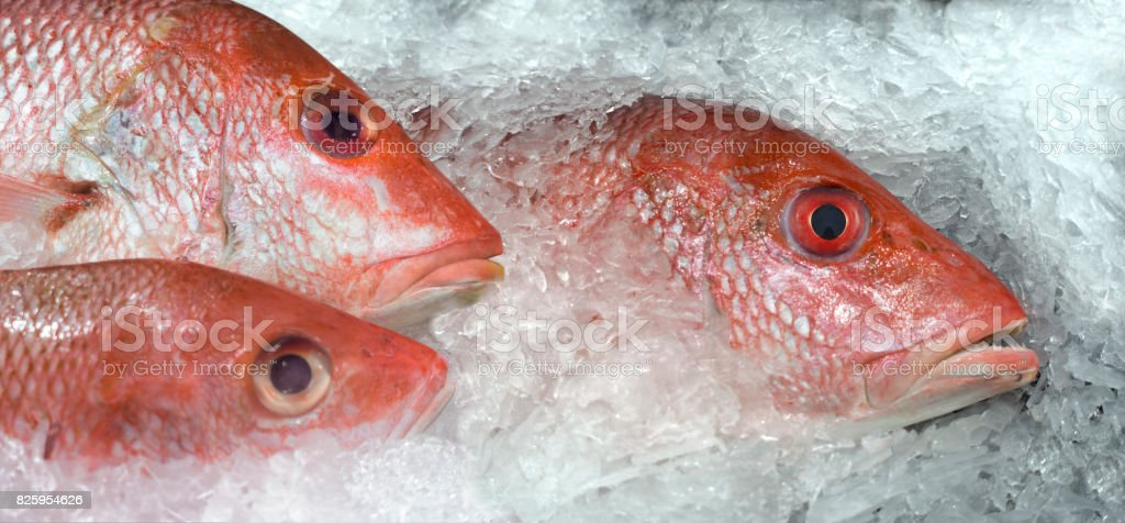 red snapper on ice stock photo