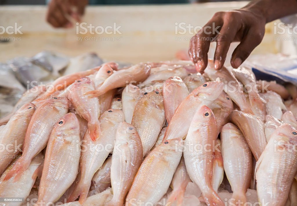 Red Snappers being picked up by a Fishmonger. stock photo