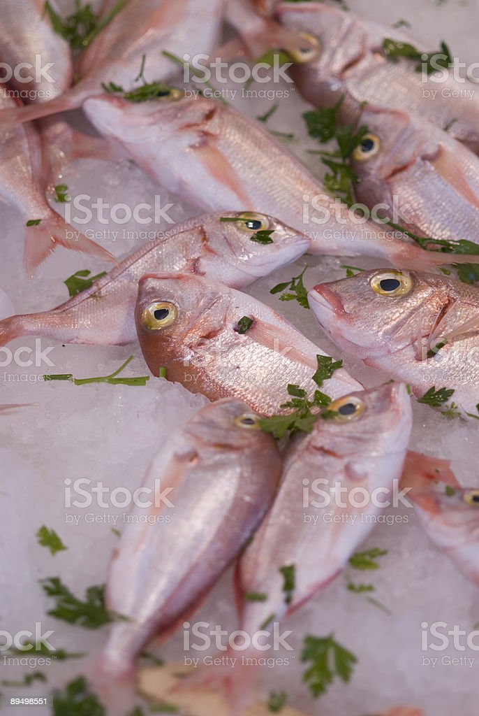 Rosso Snappers foto stock royalty-free