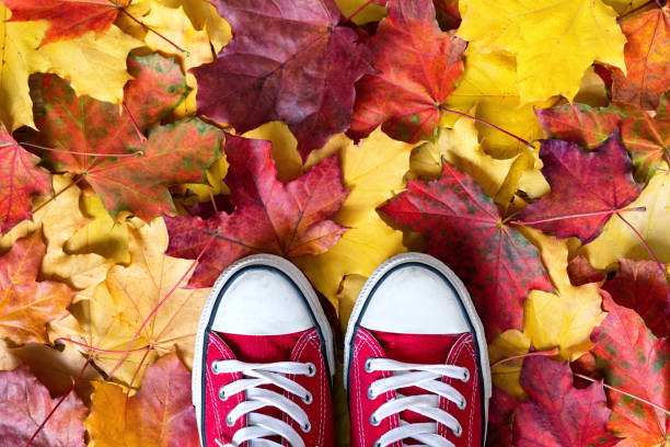Red sneakers on a yellow autumnal leaves background. stock photo