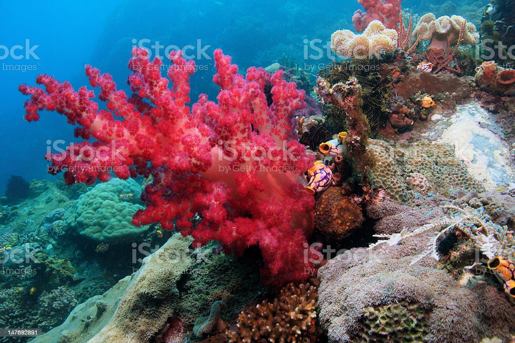 Red Soft corals stock photo