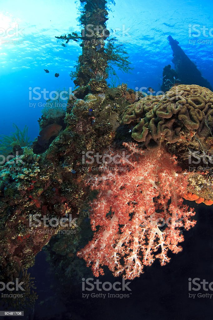 Red soft corals royalty-free stock photo