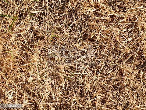 istock Red soil and grass floor background and texture 1129639979