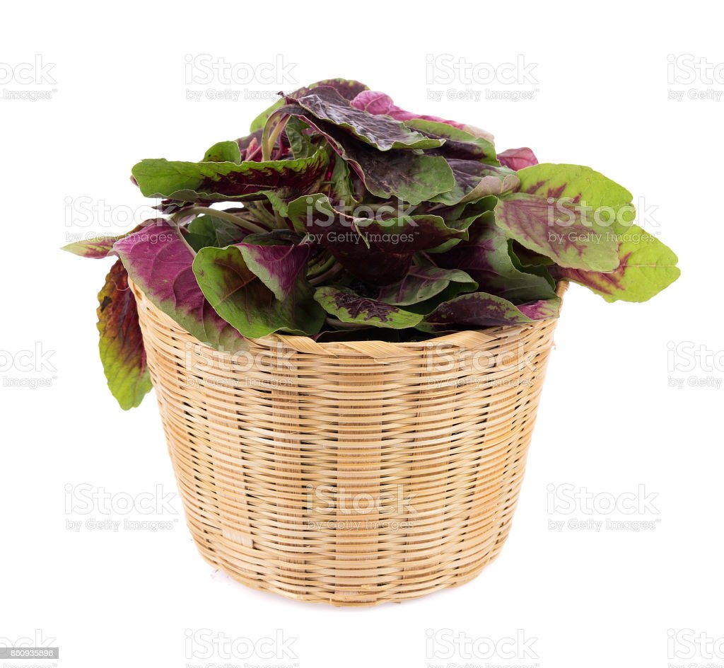 red spinach isolated on white background stock photo