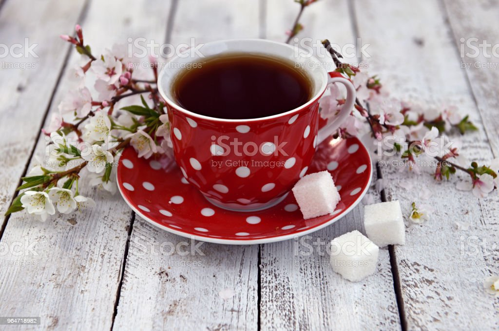 Red spotted cup of tea with sugar and blooming tree branches royalty-free stock photo