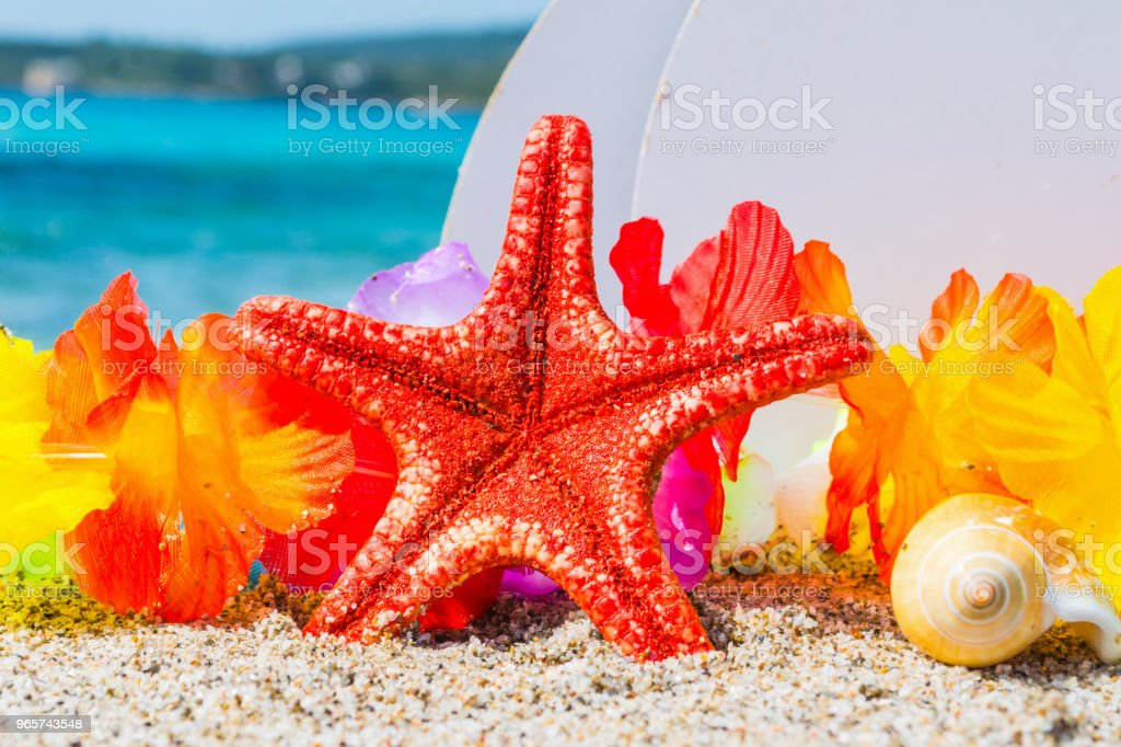 Red starfish and shell by the sea - Royalty-free Aquatic Organism Stock Photo