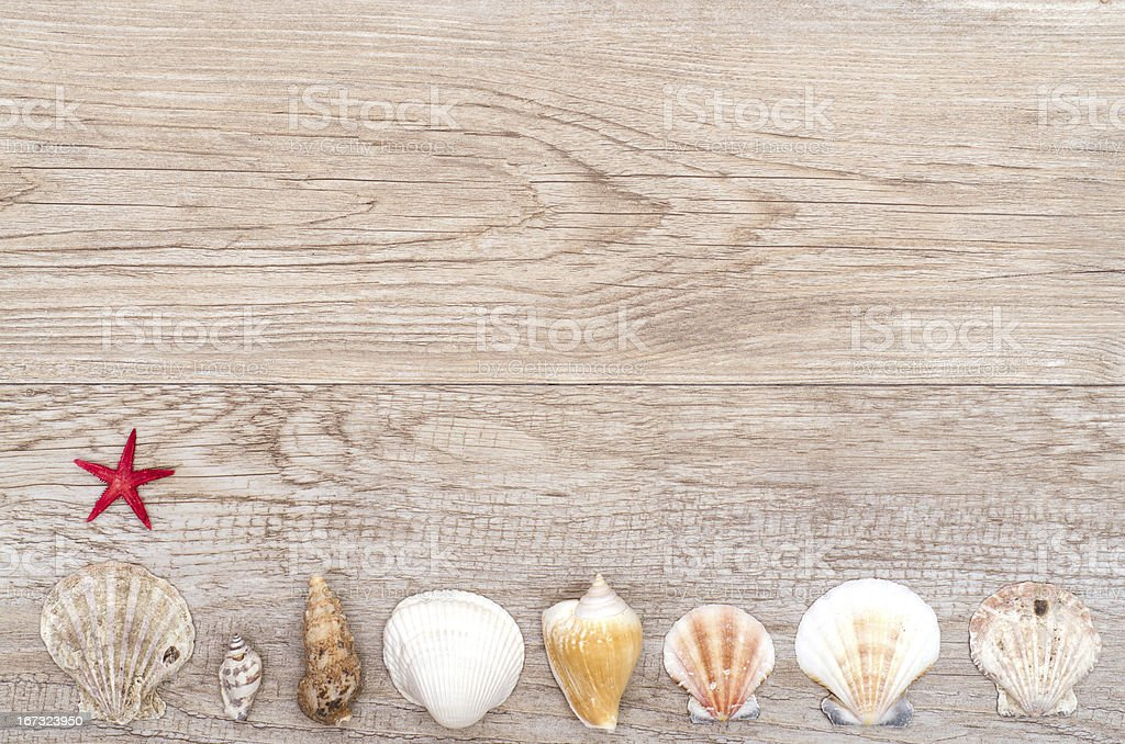 Red starfish and shells royalty-free stock photo