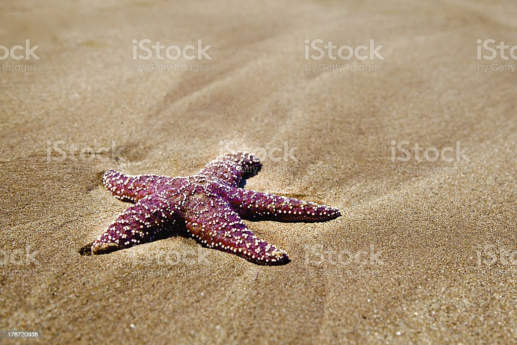 Red Starfish on Beach royalty-free stock photo