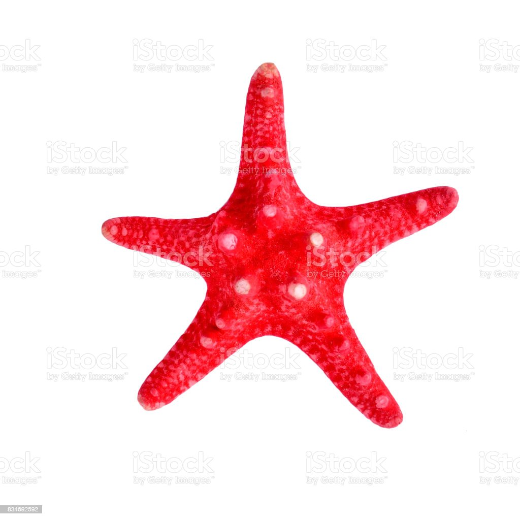 A red starfish on isolated white background stock photo