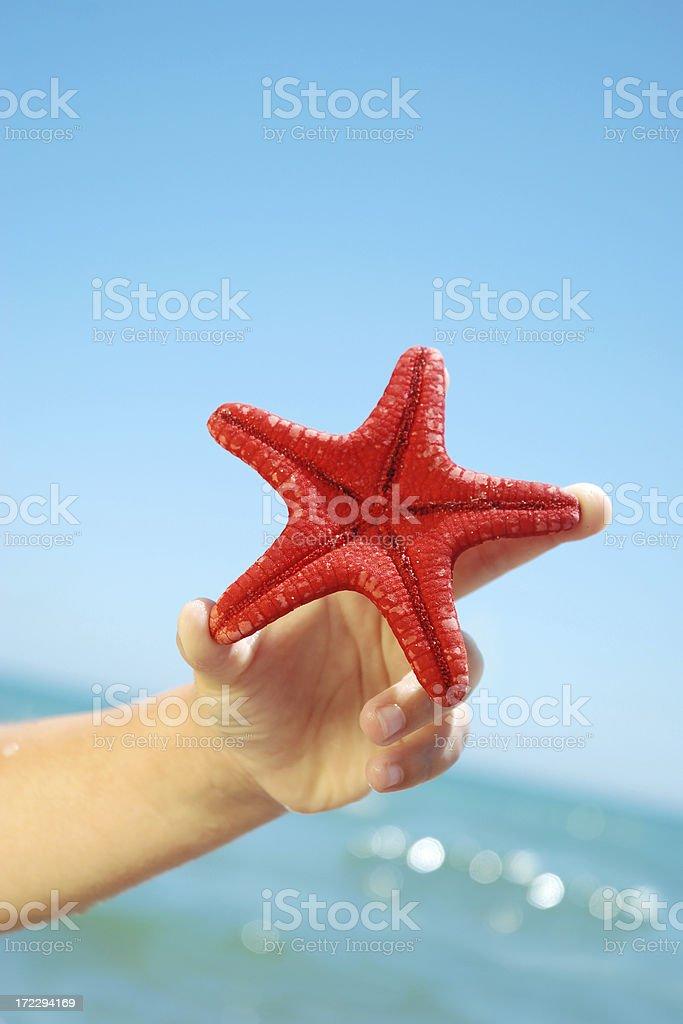 Red starfish. royalty-free stock photo