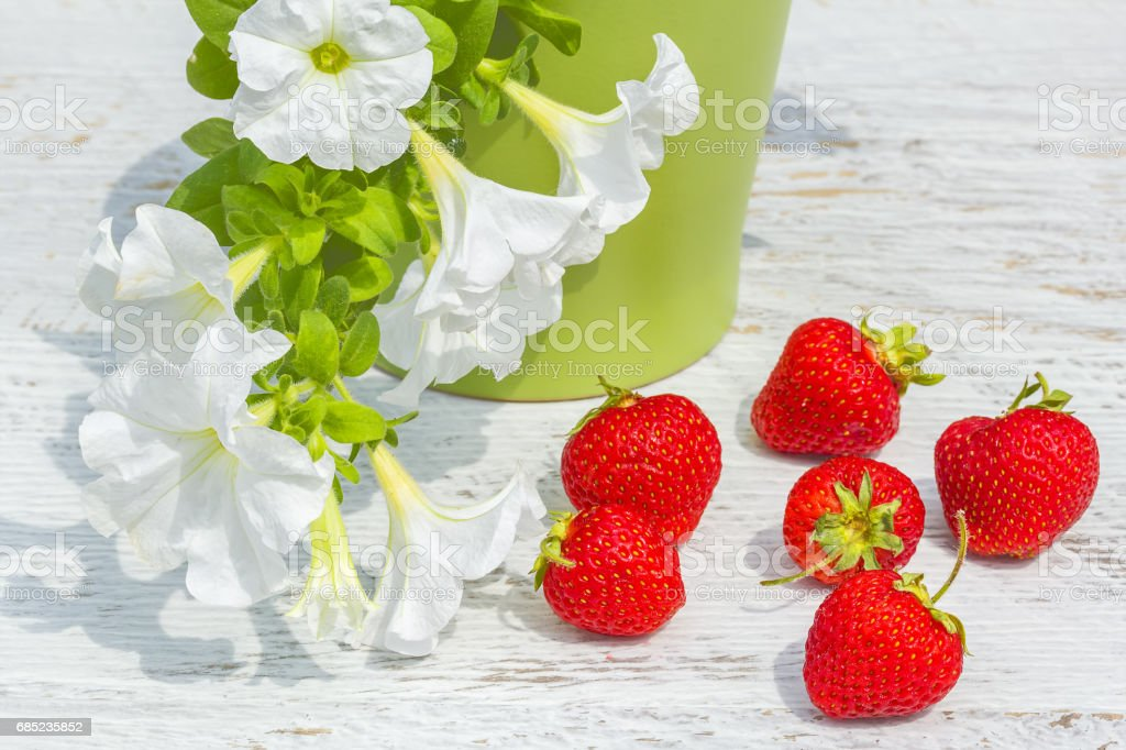Red strawberry and white petunia in a flowerpot, close-up foto de stock royalty-free