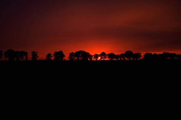 red sunset behind the trees, poland - poland foto e immagini stock