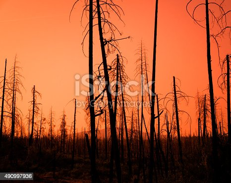 Red Sunset Through The Burnt Trees Of A Forest After A Fire