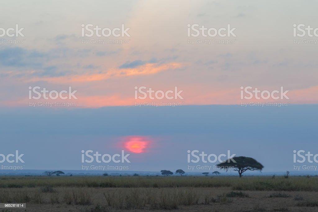 Red sunset in Africa. Amboseli, Kenya zbiór zdjęć royalty-free