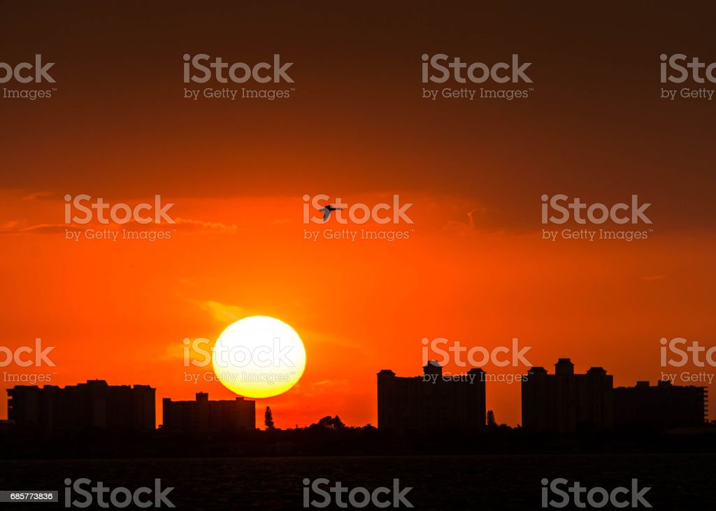 Red sunset sky in the city bird flying royalty-free stock photo