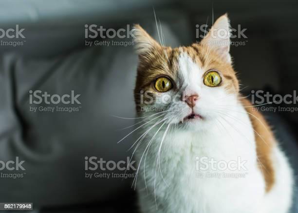 Red tabby cat making funny face picture id862179948?b=1&k=6&m=862179948&s=612x612&h=ppvu416lrwikabzj7iewcpzfktctjl28jqzctycqc0e=