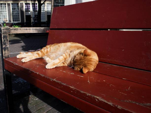 Outstanding Red Tabby Cat Sleeping On A Red Bench In Amsterdam Stock Inzonedesignstudio Interior Chair Design Inzonedesignstudiocom