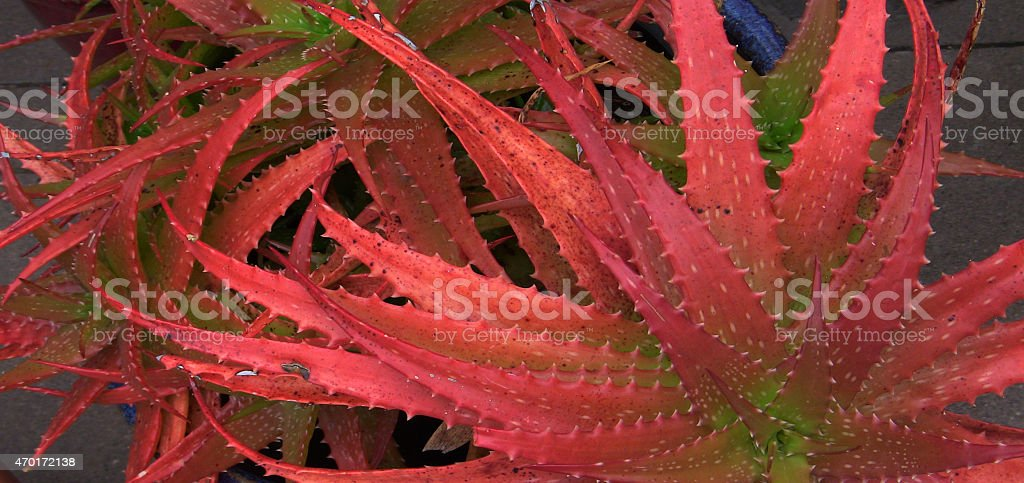Red Tentacles stock photo