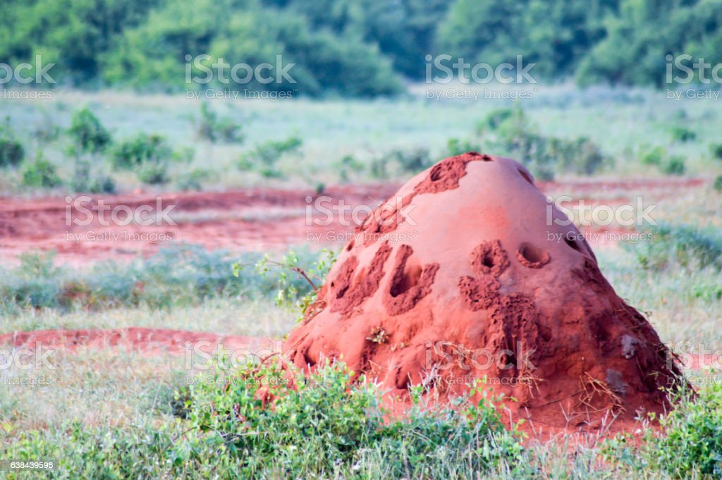 Red Termite Mound stock photo