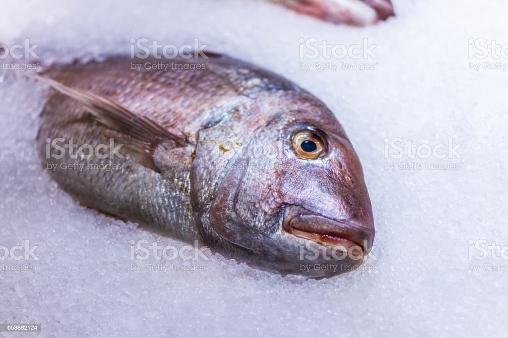 Red thai snapper whole fish on ice on display in market stock photo