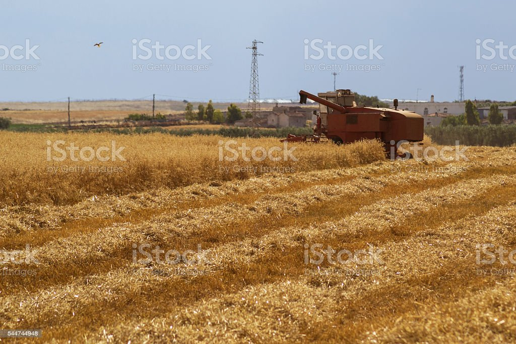 Red Threshing machine working on a summer field stock photo