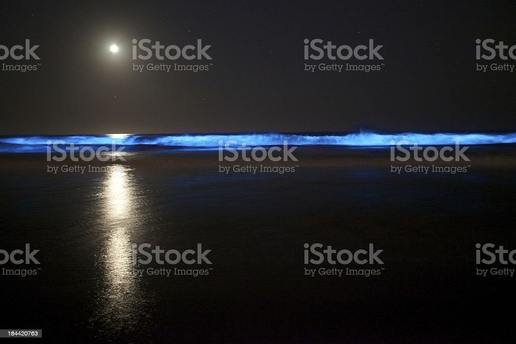 Red Tide stock photo