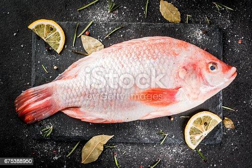 Red Tilapia Fish