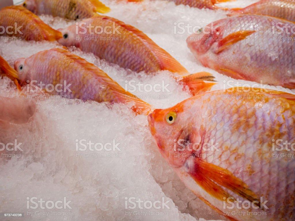 Fotografía de Tilapia Roja Pescado Fresco Está En El Puesto En El ...