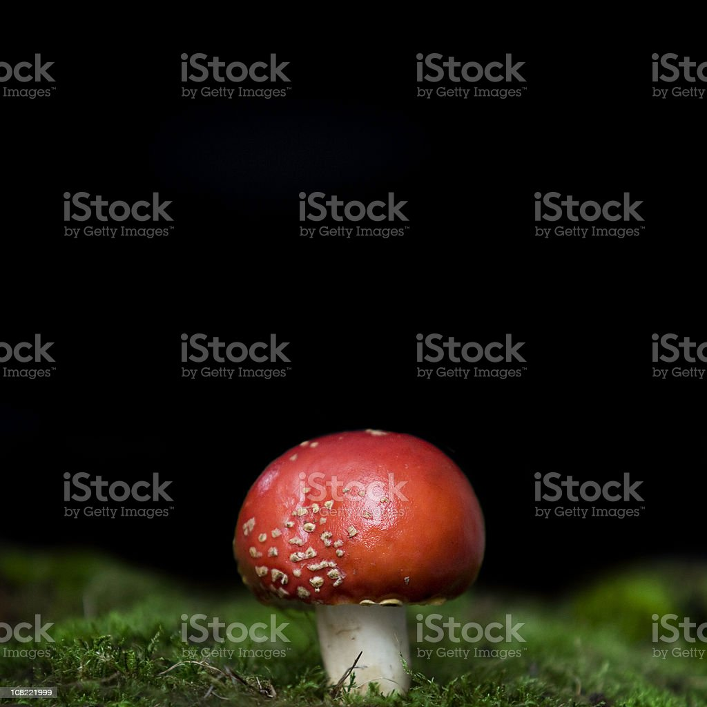 Red Toadstool and Moss Isolated on Black Background royalty-free stock photo