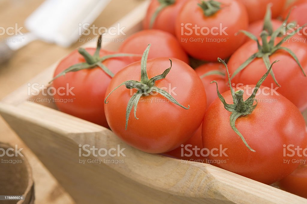 Red Tomatoes In A Wooden Trug royalty-free stock photo