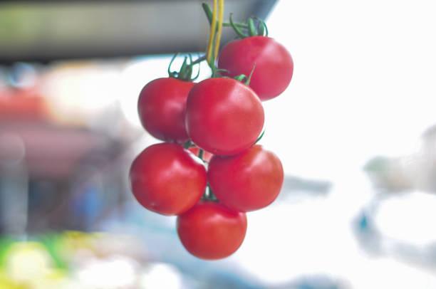 Red Tomaten – Foto