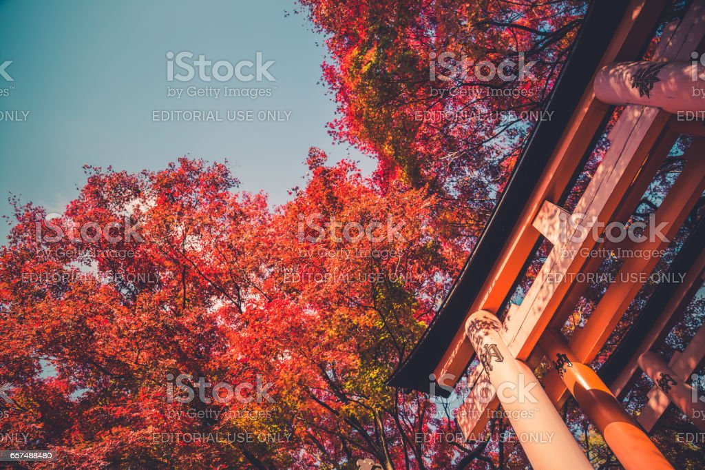 Red torii gate stock photo