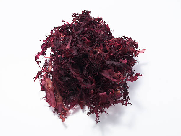 algas rojas tosaka - algas fondo blanco fotografías e imágenes de stock