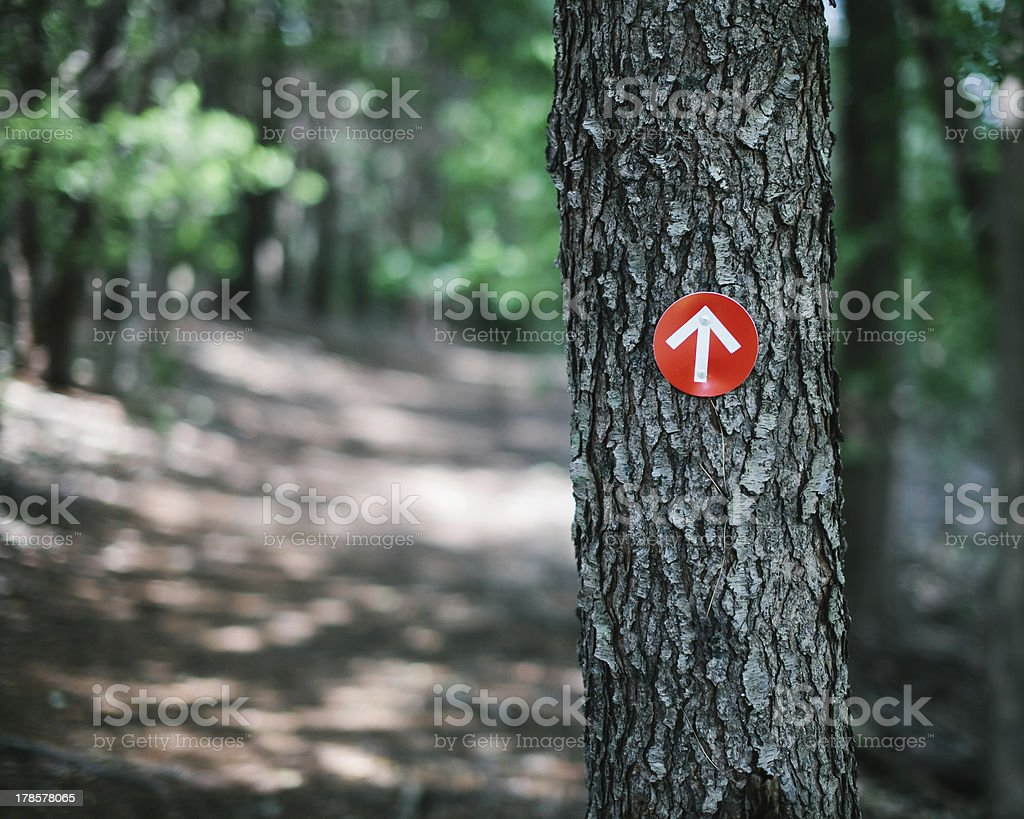 Red Trail Marker on a Wooded Path stock photo