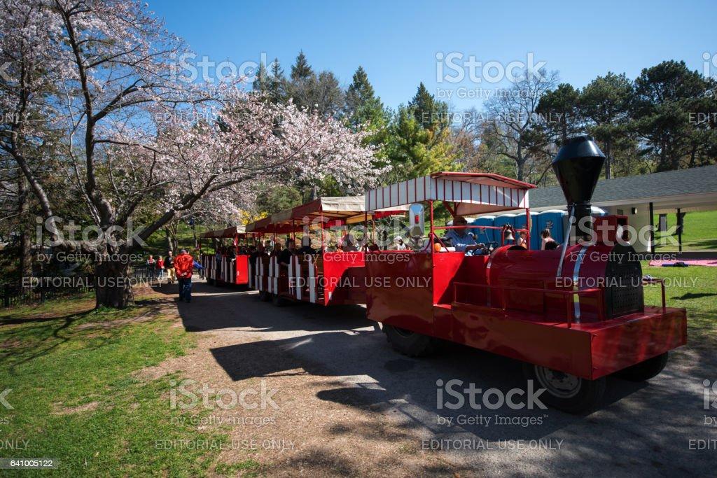 Tren rojo en Sakura - foto de stock