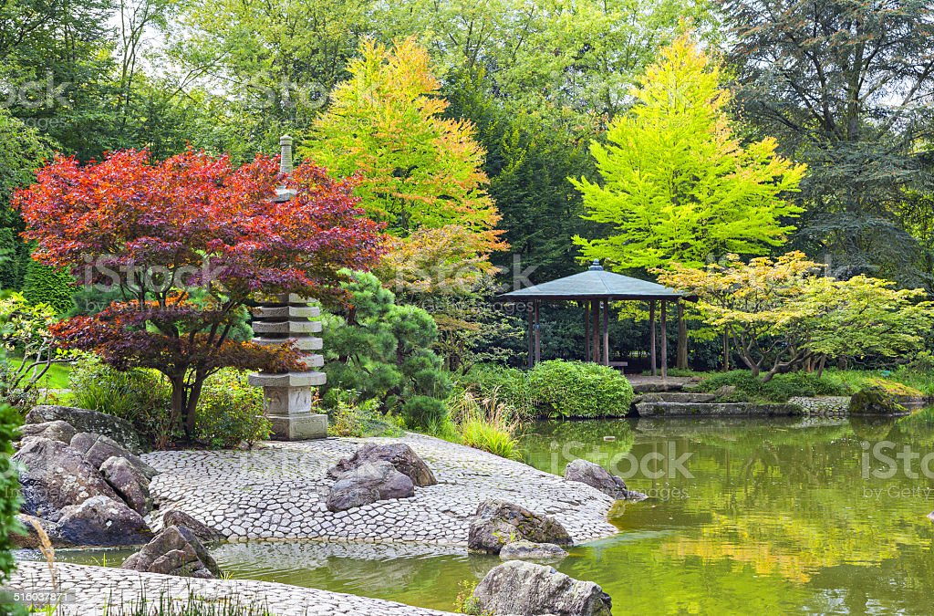 Red tree near the green pond in Japanese garden stock photo