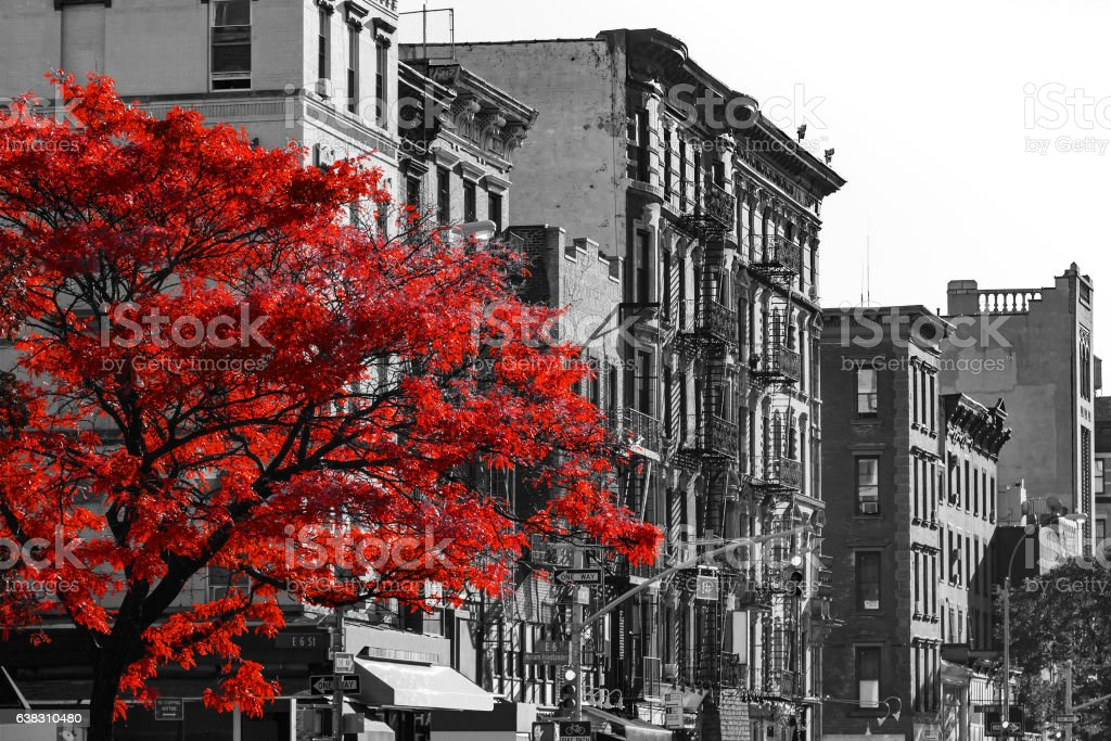Red Tree On Black And White New York City Street Stockfoto