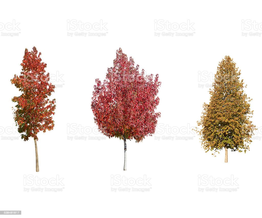 Red Trees  Isolated On White Background stock photo