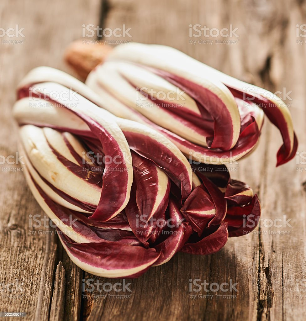 Red Treviso radicchio stock photo